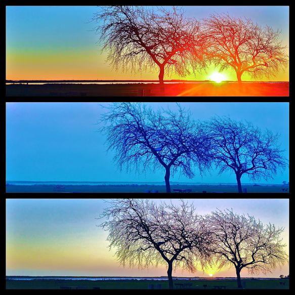 Samme strand, samme tidspunkt, tre morgener i træk.