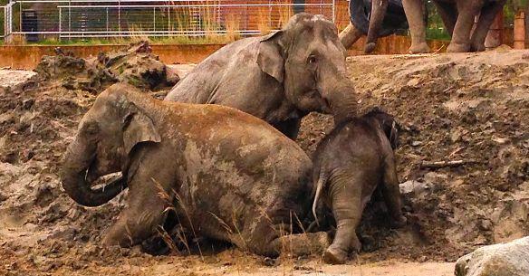 elefantgoegl1