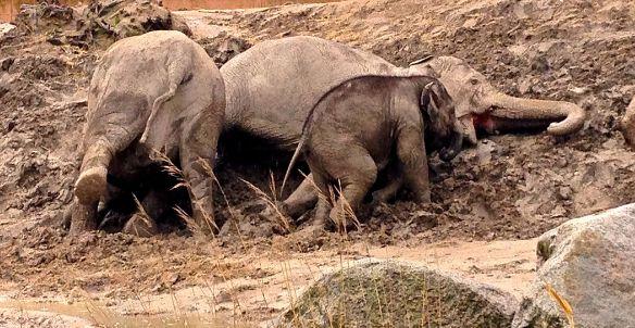 elefantgoegl2