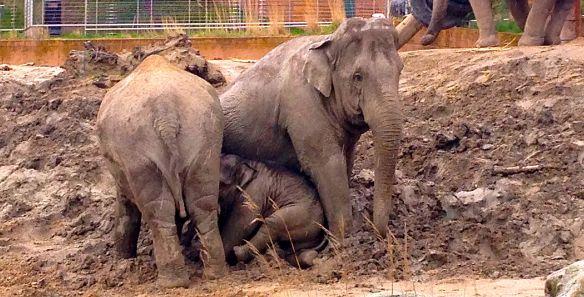 elefantgoegl4